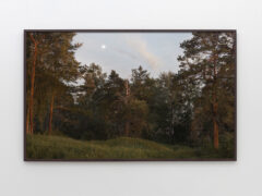 Landscape Painting (Forest)