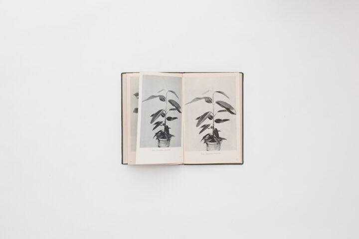 book45 a