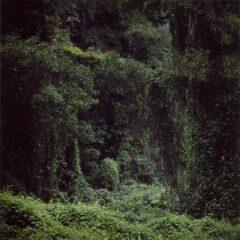 Untitled (Woodland) #56