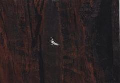 Untitled (Condor)