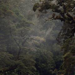 Untitled (Woodland) 91