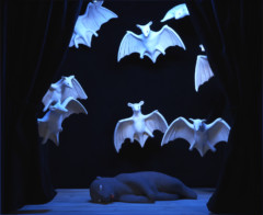 Welcome to the land of the bat