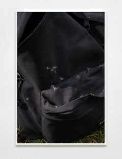 Eastpak, dandelion seeds